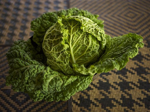 Savoy cabbage 790 xxx
