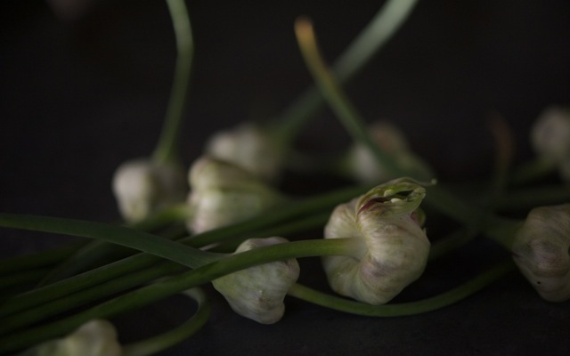 Garlic flowers 790 xxx