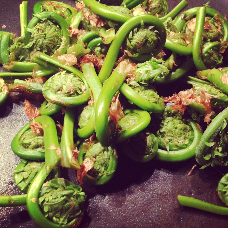 Fiddleheads 790 xxx