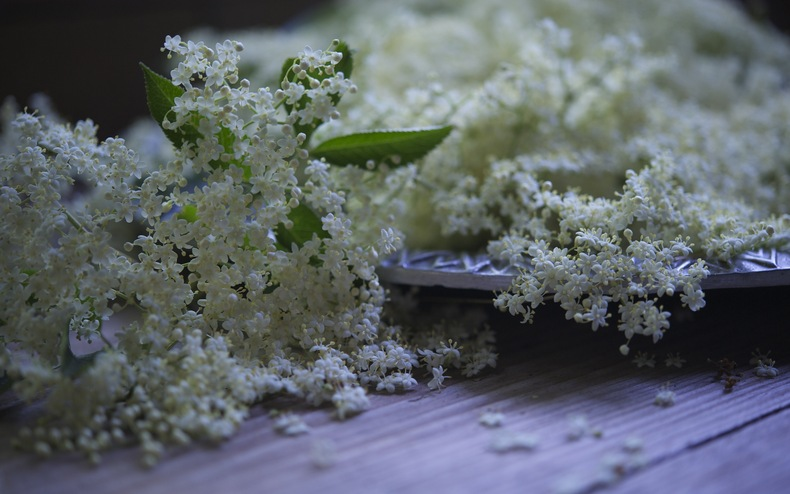 Elderflower 790 xxx