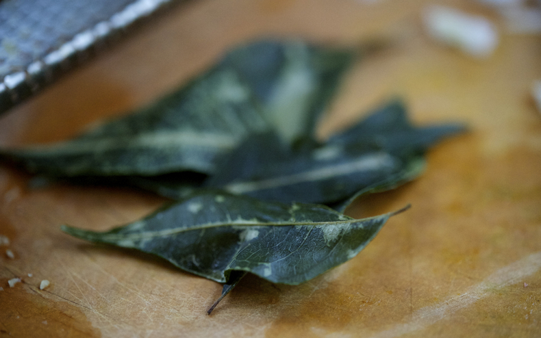 Curry leaves 790 xxx