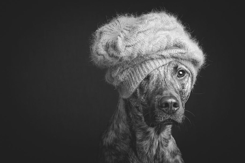 Dog portrait photography elke vogelsang 13 790 xxx